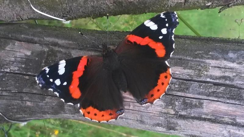 Spirituální motýl