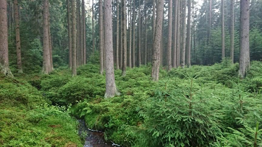 Mluví les?